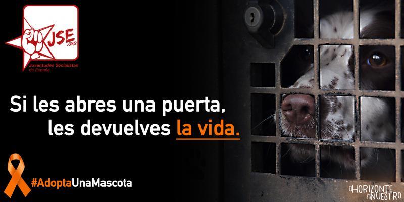 """JSE lanza la campaña """"Si les abres una puerta, les devuelves la vida"""" contra el maltrato animal."""